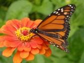 monarch visit