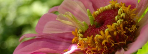 cropped-zinnia-shadows.jpg