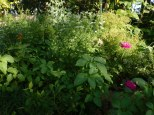 weeds and flowers and herbs and vegetables share space