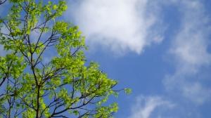 intense blue sky