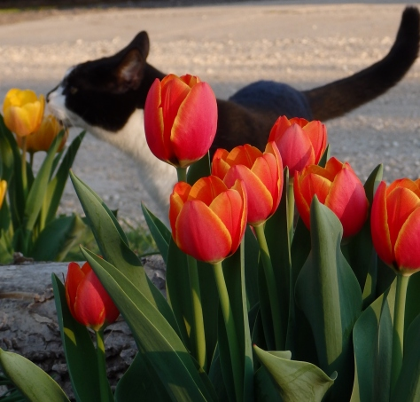 time to smell the tulips