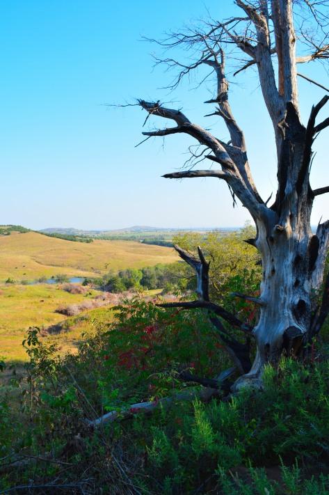 burnt tree plains