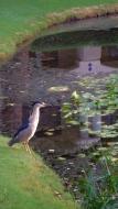 egret reflect