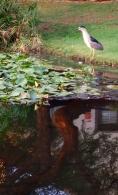 egret reflect 1