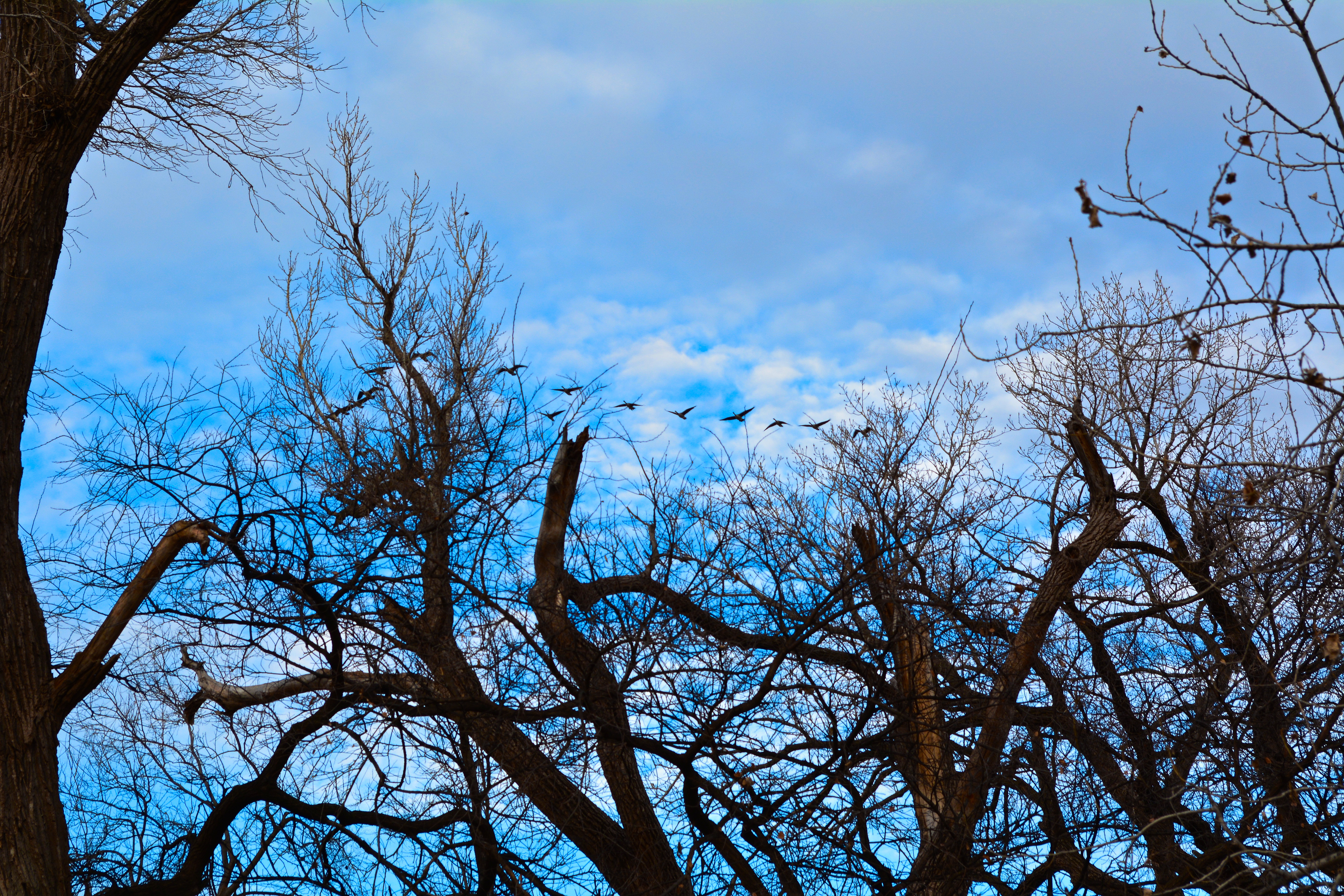 geese and skies and trees